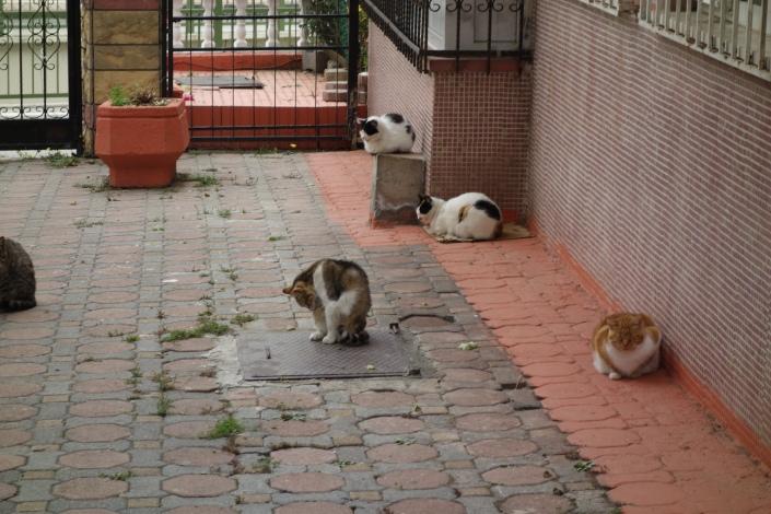 Kediler de Allah'ı tesbih eder