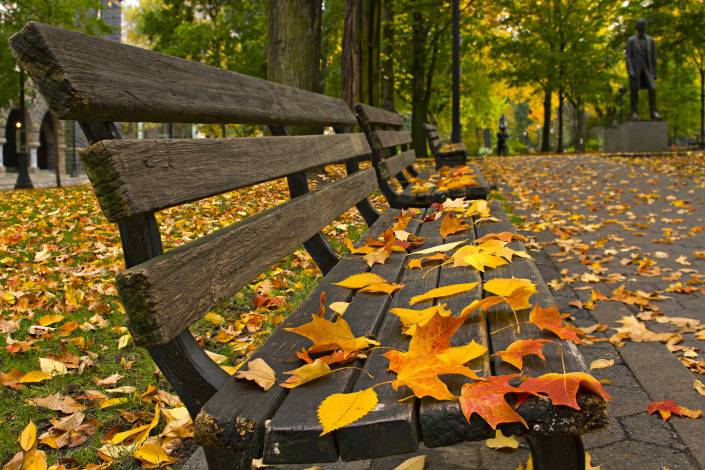 autumn fall leaf bench park